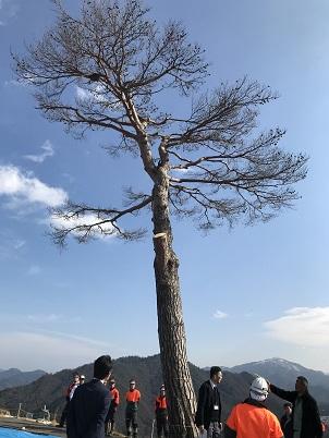 竹田城跡の「一本松」がバイオリンに