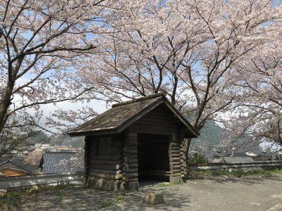 一気に散った桜・・・
